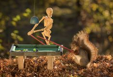 Squirrel with skeleton att a pool table Royalty Free Stock Photos