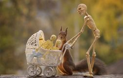 Squirrel and a stroller with a skeleton behind Stock Image