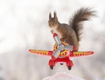 Red squirrel standing on an airplane. Red squirrel is standing on an airplane royalty free stock photo