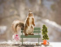 Red squirrel in the sun on a bench. Red squirrel in the sun on an bench Stock Images