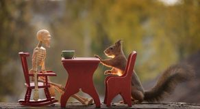 Squirrel with table and a skeleton Royalty Free Stock Images