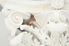 Red squirrel on a white decorative column with stucco. Red squirrel on a white decorative column with a winter day stucco Stock Image