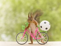 Free Red Squirrel With A Cycle And A Football Royalty Free Stock Photography - 117105477