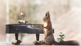 Free Red Squirrel With An Piano Stock Images - 115645244