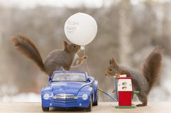 Red squirrels with a car, balloon  and a gas station Stock Images