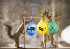 Red squirrels with happy birthday balloons. Red squirrels standing with happy birthday balloons Stock Images