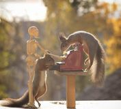 Squirrels holding a cash register with  skeleton Stock Image