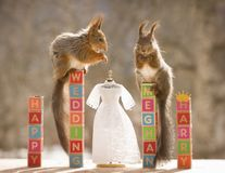 Free Red Squirrels On Text Blocks With A Wedding Dress Royalty Free Stock Photography - 115205907