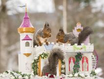 Red squirrels together in an palace Royalty Free Stock Image