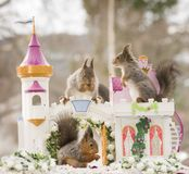 Red squirrels are together in a palace Royalty Free Stock Images