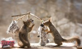 Red squirrels with a washing line. Red squirrels with an washing line Royalty Free Stock Photos