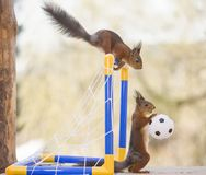 Free Red Squirrels With A Football And Goal Stock Image - 116604371