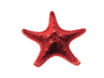 Red star. The red starfish isolated white Royalty Free Stock Photos