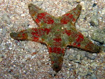 Red Star Fish on Sand Royalty Free Stock Photography
