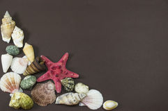 Red star fish and sea shells Stock Photos