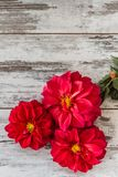 Red Star Flower Stock Images