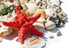 Red star and sea shells Royalty Free Stock Photo