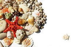 Red star and sea shells Stock Image