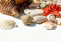 Red star and sea shells Stock Photos