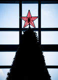 Red star on top of christmas tree Stock Photo
