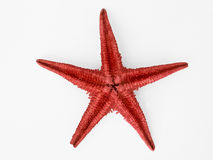 Red Starfish. Isolated on a white background Royalty Free Stock Photography