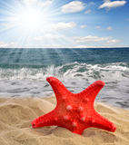 Red starfish. Lying on the beach Royalty Free Stock Image