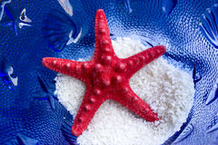 Red starfish Royalty Free Stock Images