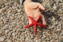Red starfish Royalty Free Stock Photos