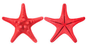 Free Red Starfish Stock Photos - 32084563