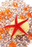 Red starfish Stock Photography