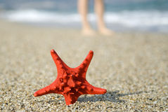 Red starfish on the beach Stock Photos