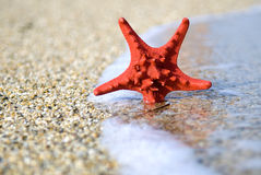 Red starfish on the beach Stock Image