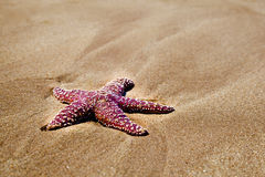 Red Starfish on Beach Royalty Free Stock Image