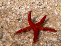 Red starfish on the beach on the island of Kefalonia in the Ionian Sea in Greece royalty free stock photo