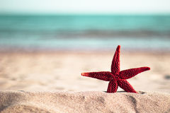 Red starfish on the beach Royalty Free Stock Photo