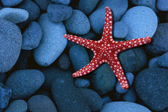 Red starfish on blue stones Royalty Free Stock Photo