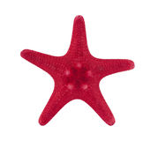 Red starfish with clipping path Royalty Free Stock Photography