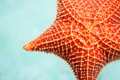 Red starfish. Close up of red starfish in a tropical water Stock Images