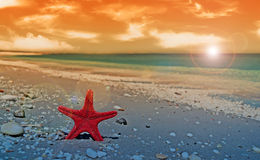Red starfish at dusk Stock Photography