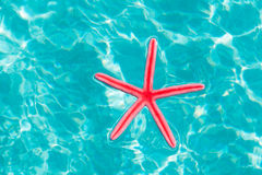 Red starfish floating on clean turquoise water Royalty Free Stock Photography