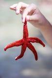 Red starfish in hand Stock Photo