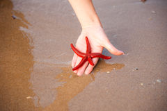 Red Starfish in Hand Royalty Free Stock Photos