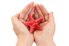 Red starfish in hands Stock Image