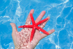 Red starfish in human hand floating Royalty Free Stock Photography