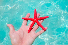 Red starfish in human hand floating Stock Image