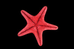 Red Starfish Isolated On Black Stock Images