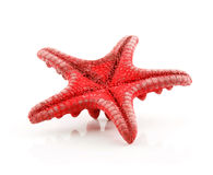 Red Starfish Isolated on a White Stock Images