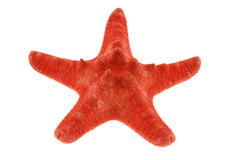 Red starfish isolated on white Stock Photos