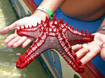 Red starfish from Kenya Stock Photography