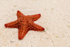 A red starfish Royalty Free Stock Photos